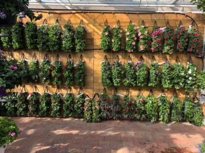 Planten - Tuincentrum Peer
