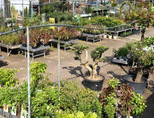 Tuincentrum Peer